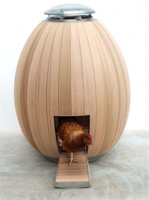 Egg coop!