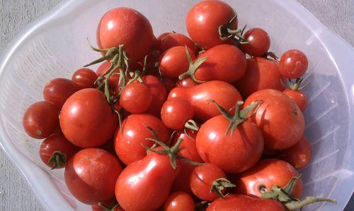 Tomatoe21